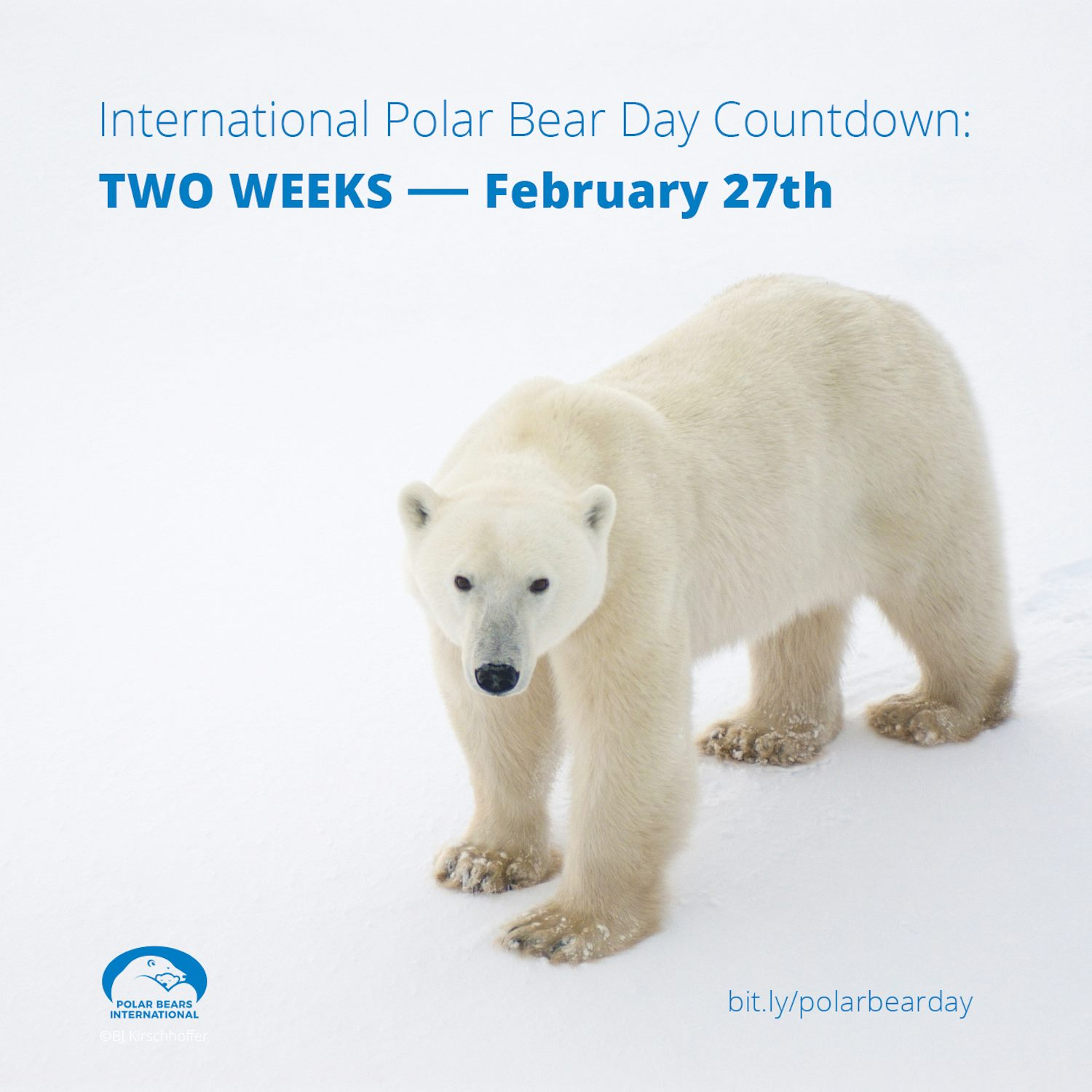20190218-polar-bear-day.jpg